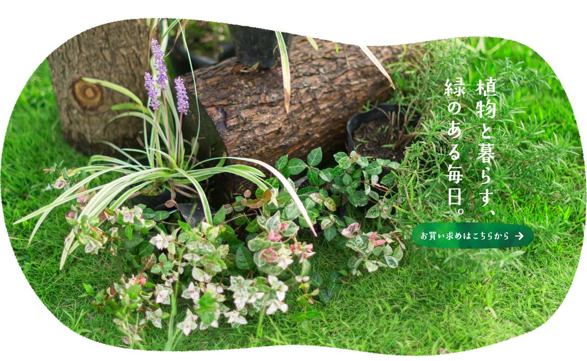 植物と暮らす、緑のある毎日。お買い求めはこちらから