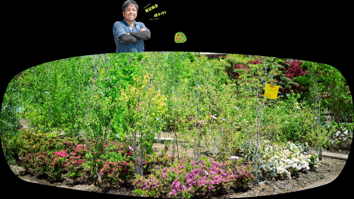 固定概念にとらわれない植木作りをめざします!